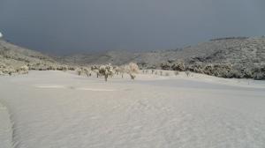 nieve en Arabella Golf Mallorca7