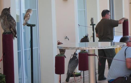 La Asociación Centre Sa Falcona hizo una exhibición con aves rapaces
