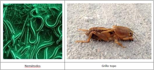 Grillo topo blog